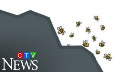 Bumblebees are climbing mountains to find cooler climates and this is why it's a problem 3
