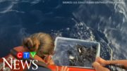 Watch as hundreds of sea turtles are released into the wild 4