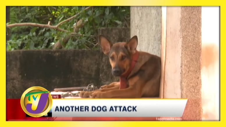 Another Dog Attack - November 22 2020 1