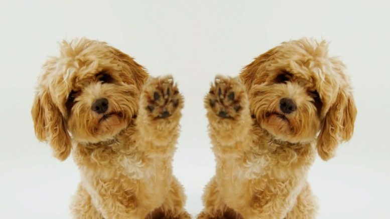 'Raise the woof!' Christmas song for dogs hits the charts 1