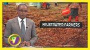 St. Elizabeth Farmers Frustrated - November 26 2020 3