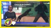 Self-Defense Against Dog Attacks - November 27 2020 2