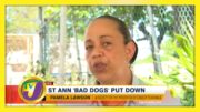 St. Ann 'Bad Dogs' Put Down - November 28 2020 3