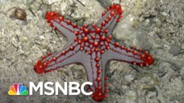Does Democracy Grow Back Like The Limb Of A Starfish? | MSNBC 8