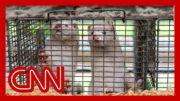 Denmark recommends 15 million mink be killed 3