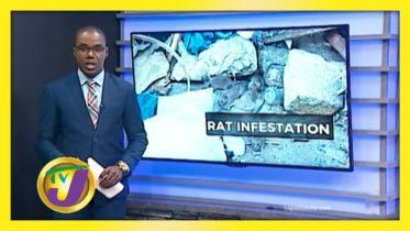 Rat Infestation in Mobay - November 11 2020 6