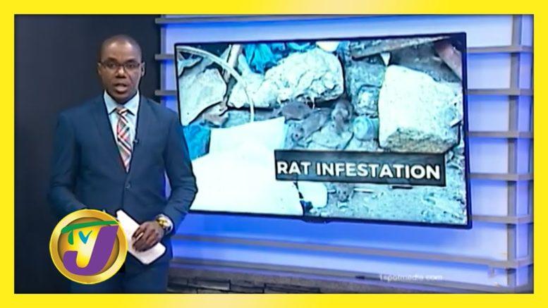 Rat Infestation in Mobay - November 11 2020 1
