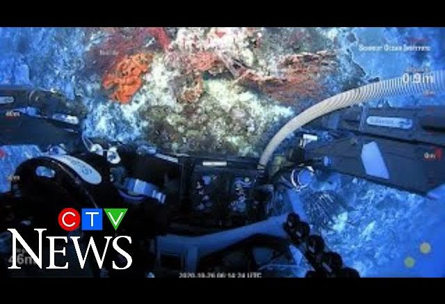 Scientists make largest coral reef discovery in more than a century 1
