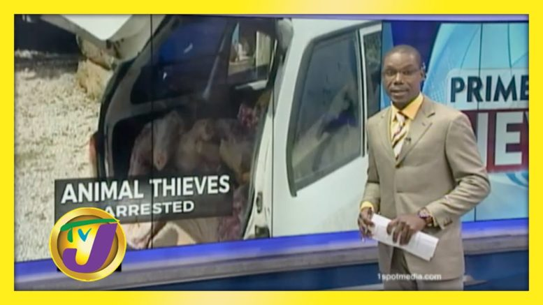 Praedial Thieves Arrested in St. Ann - December 17 2020 1
