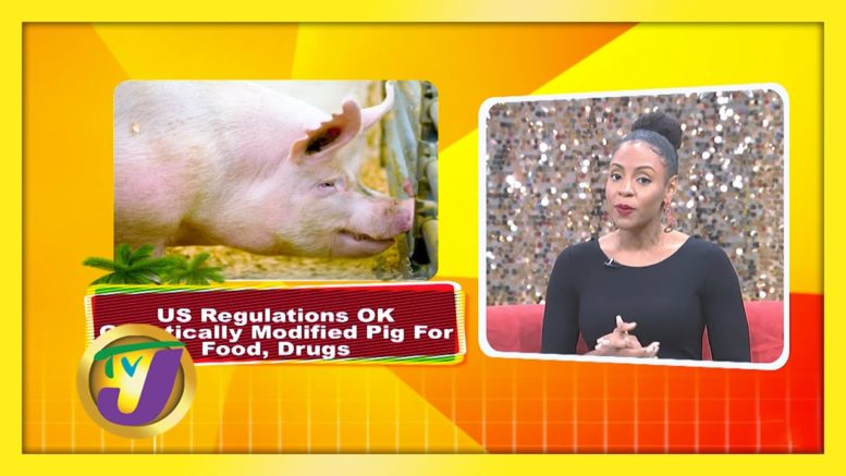 Trending Topics: TVJ Smile Jamaica - December 19 2020 1