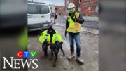 Rescue dog that went missing found at construction site in Toronto 3