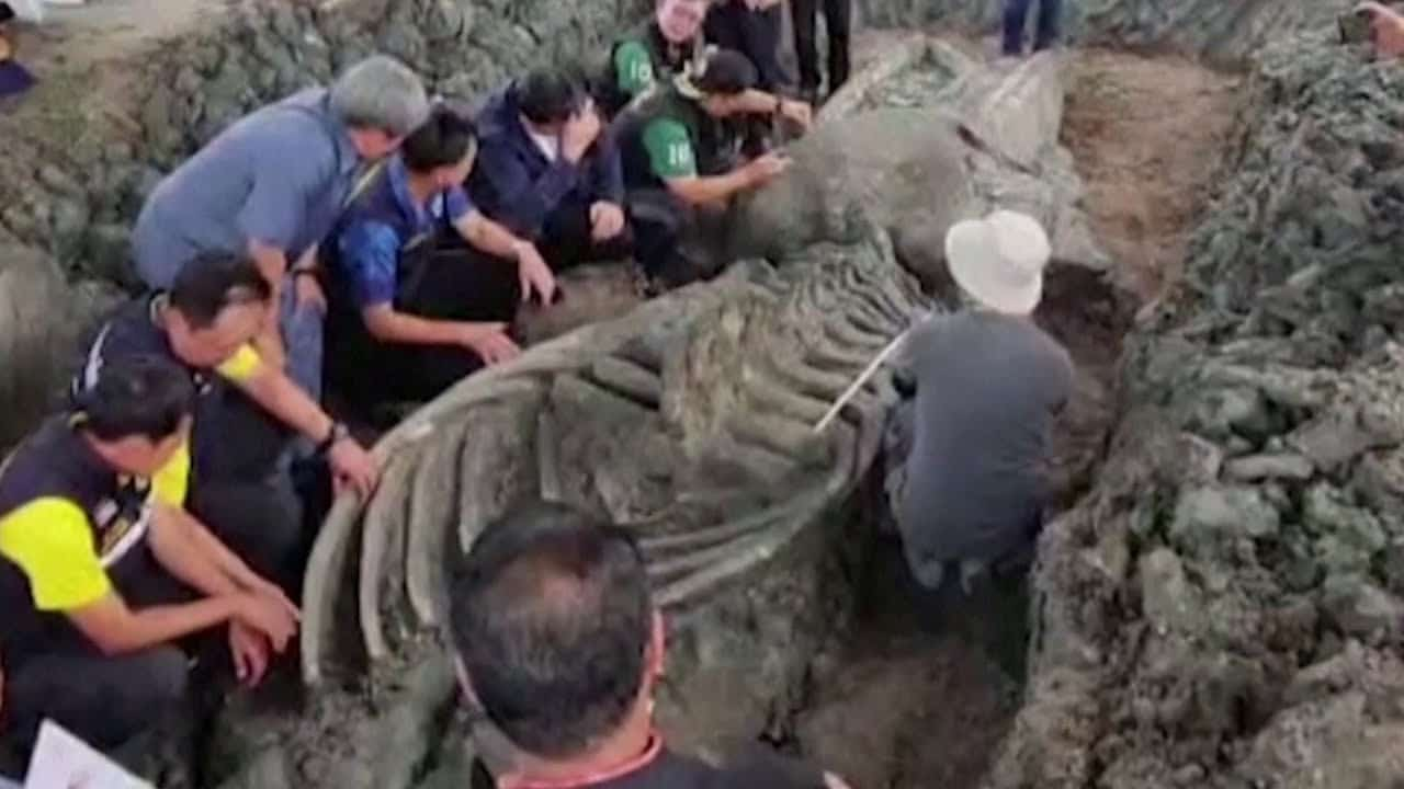5000-year-old whale skeleton discovered 1