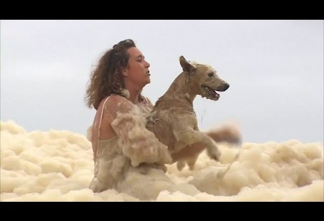 Dramatic video shows a dog being rescued from thick sea foam 1