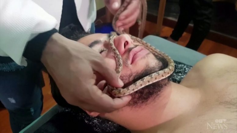 Spa in Cairo offers live snake massage 1