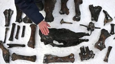 Search for ancient bones in frozen river 10