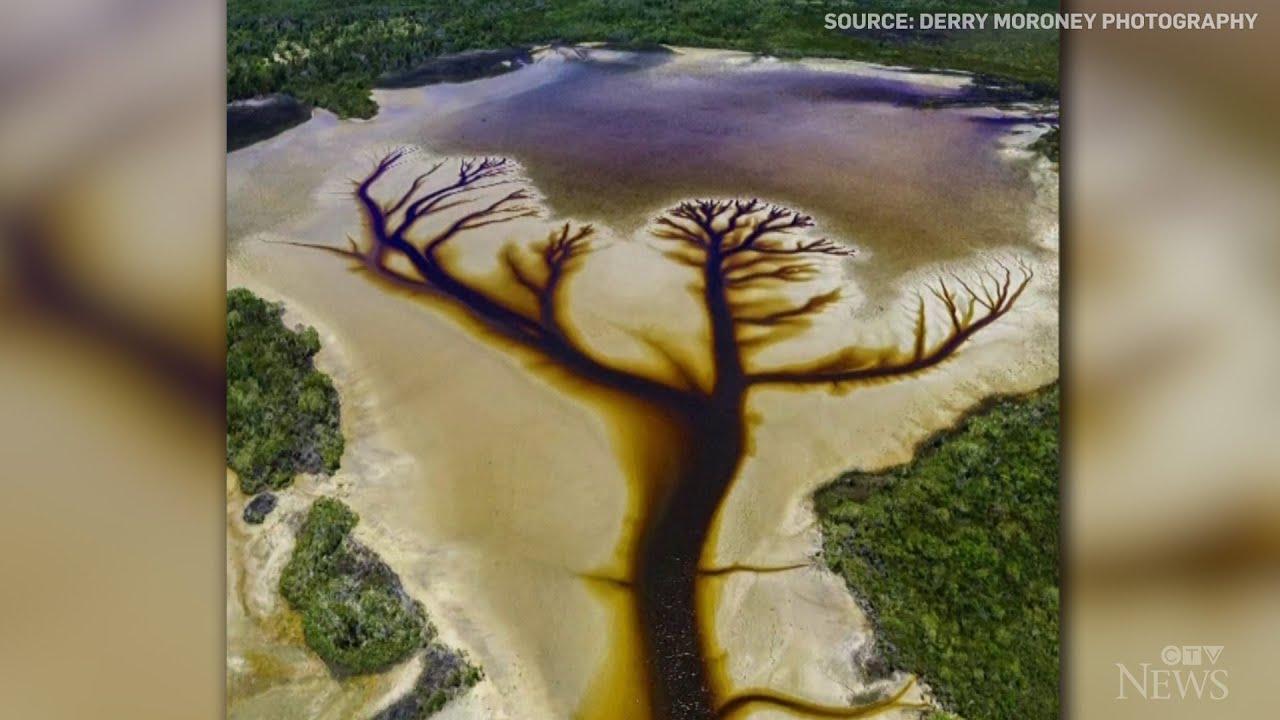 Caught on camera: Stunning tree shape found in Aussie lake 7
