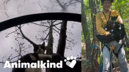 Man climbs trees to save stranded cats | Animalkind 5