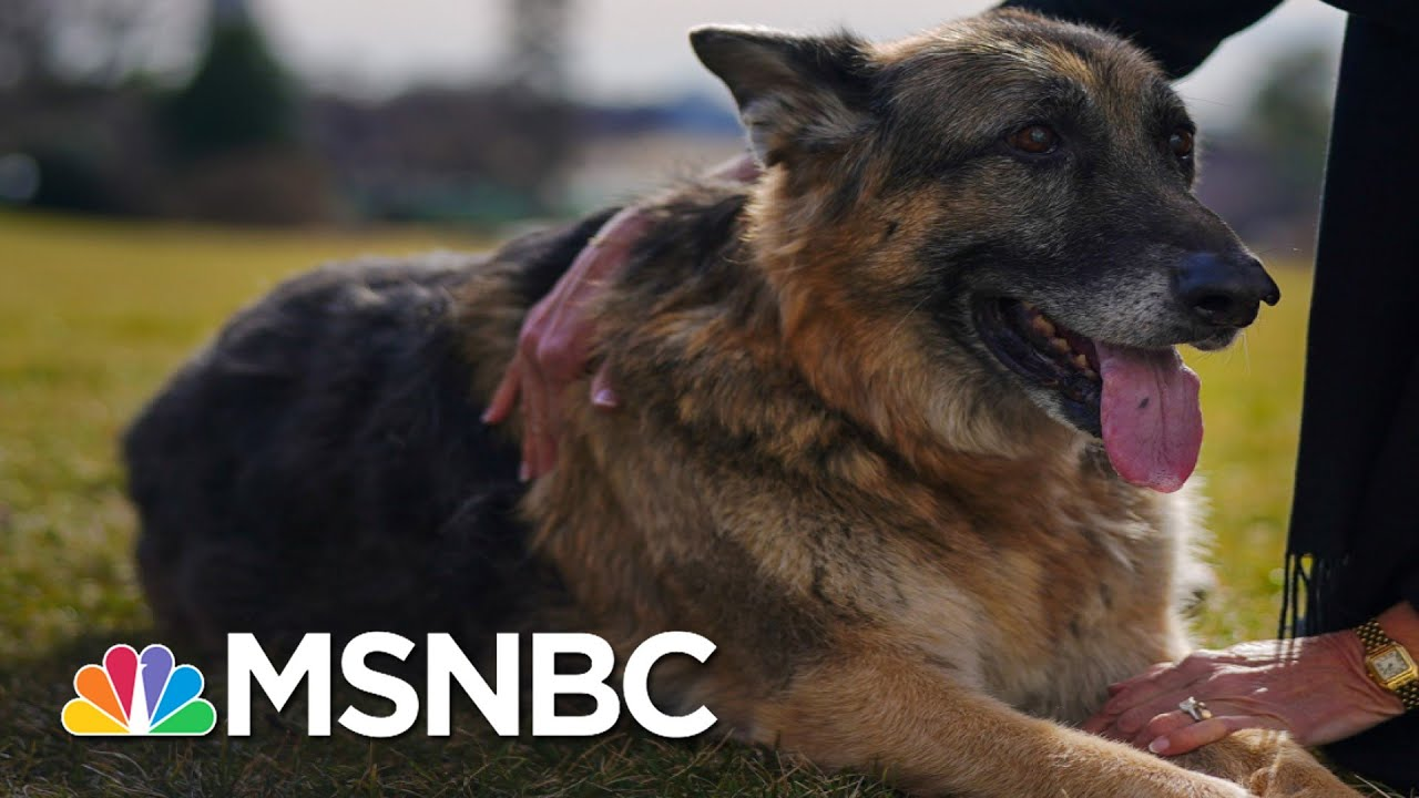 Right-Wing Newsmax Host Greg Kelly Went After Biden's Dog   The 11th Hour   MSNBC 5