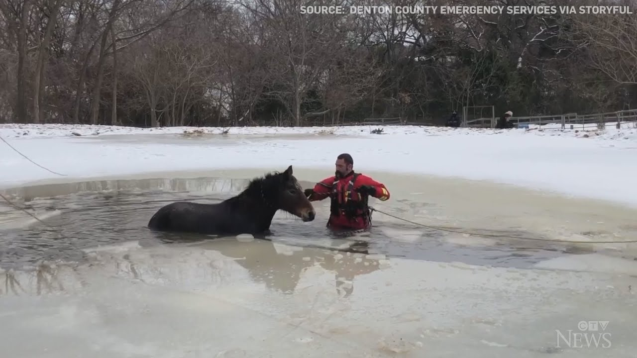 Caught on cam: Horse rescued from icy Texas pond 6
