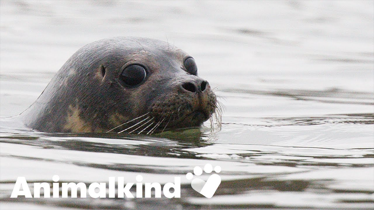 Happy and healed, seals bounce back to the water | Animalkind 1