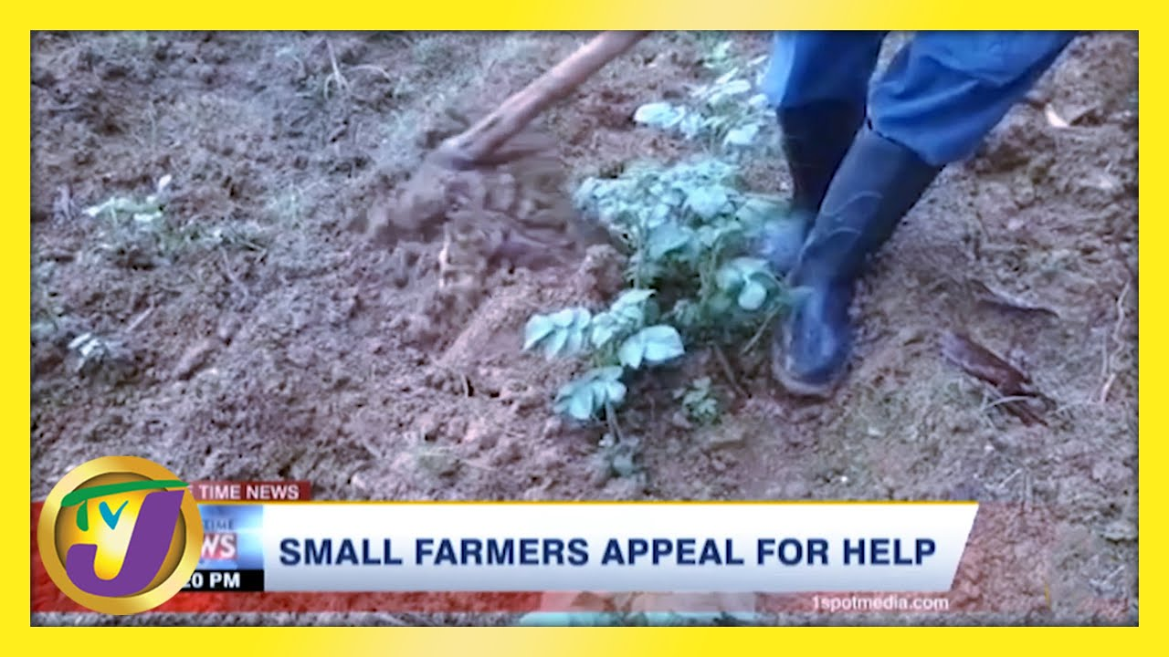 Jamaica's Small Farmers Appeal for Help - February 21 2021 1