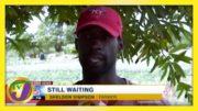 Jamaican Farmers Slam Gov't over Covid Relief - February 23 2021 4