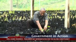 GOVERNMENT IN ACTION - Plant Nursery In Concord 2
