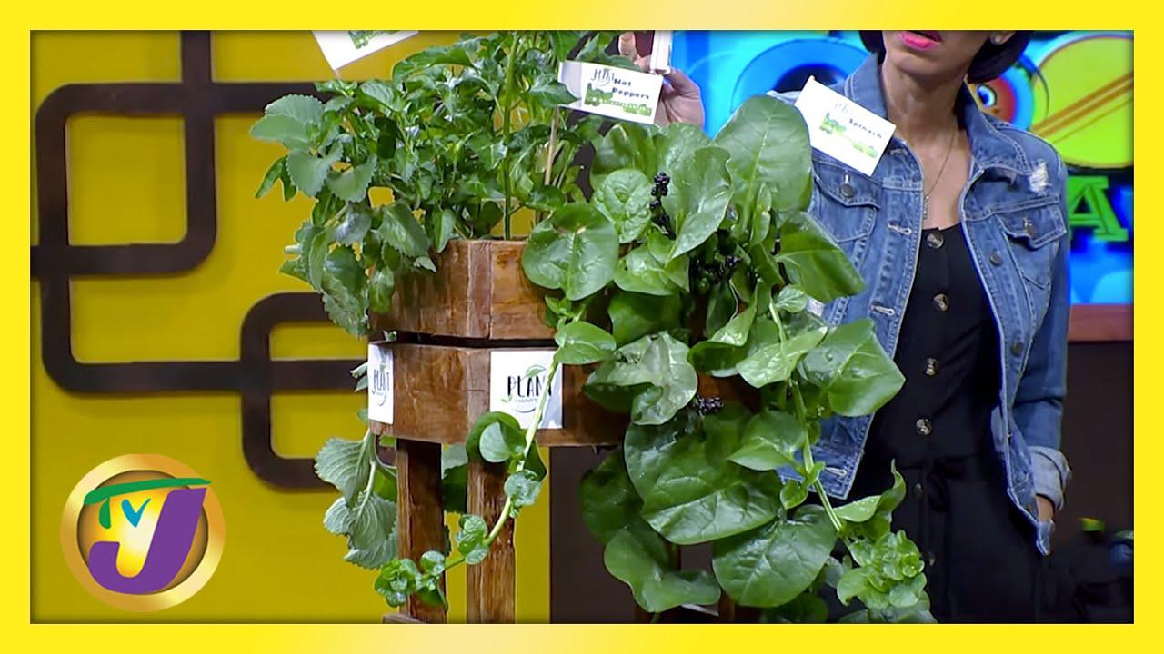 Urban Garden: TVJ Smile Jamaica - March 5 2021 1