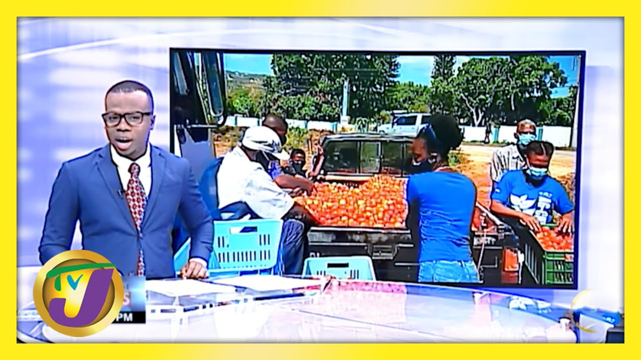 RADA Buys 16,000 Pounds of Tomatoes in New Forest - March 6 2021 1