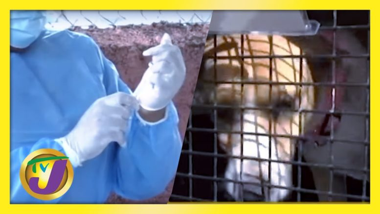 Dogs Migrate to Canada from Jamaica | Vaccine Wasted Audit Announced | Medical Oxygen Shortage 1