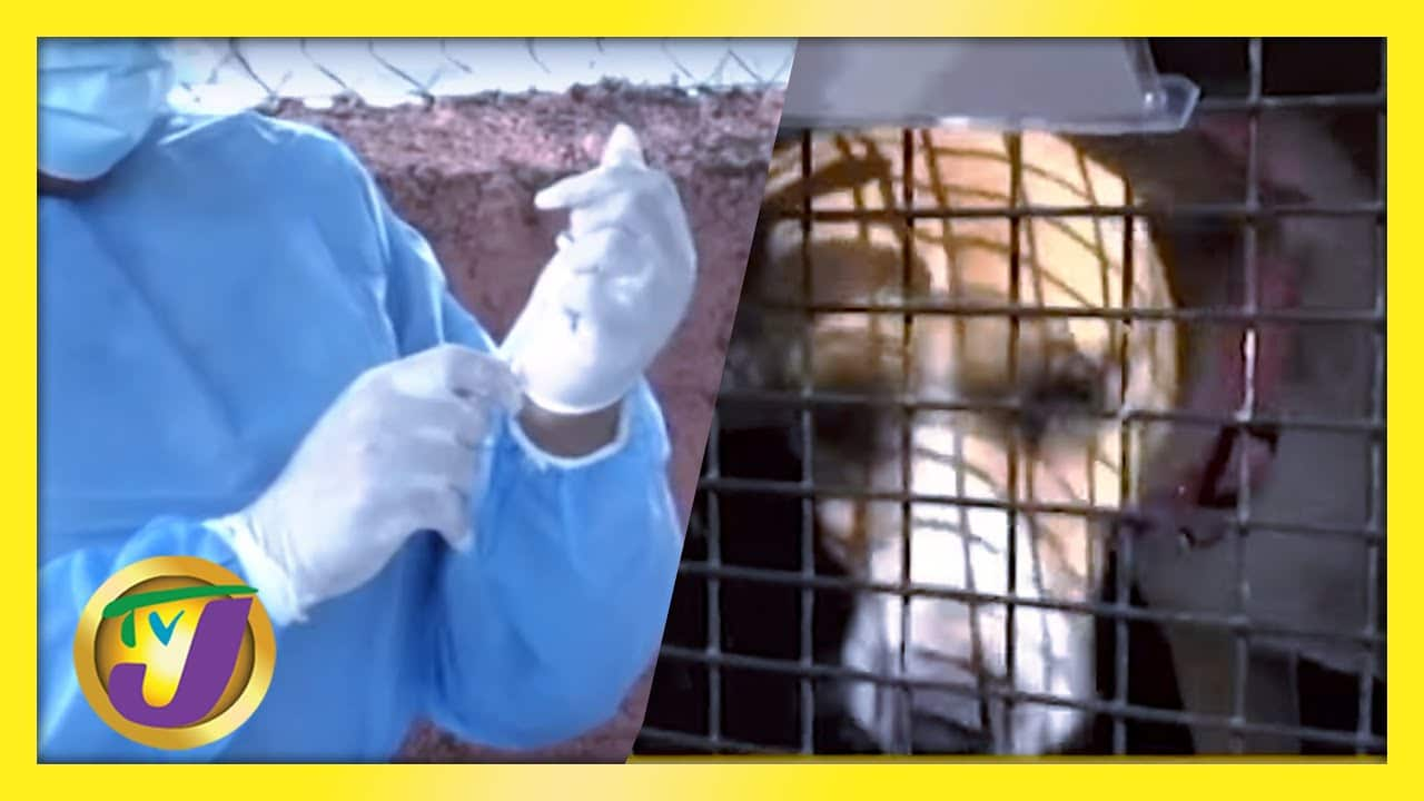 Dogs Migrate to Canada from Jamaica   Vaccine Wasted Audit Announced   Medical Oxygen Shortage 1