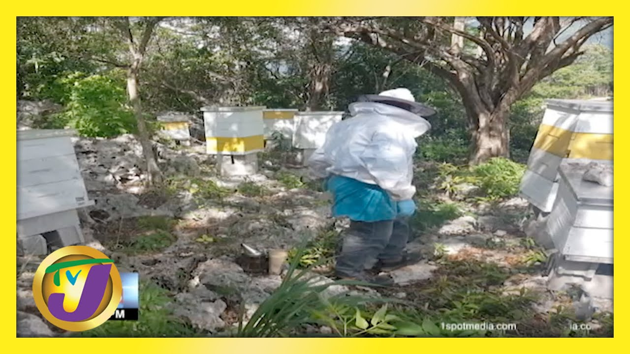 Beekeepers Satisfying Local Honey Demand | TVJ Business Day - March 28 2021 1
