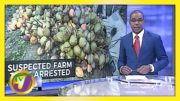 Suspected Farm Thief in St. Mary Jamaica Arrested - February 26 2021 3