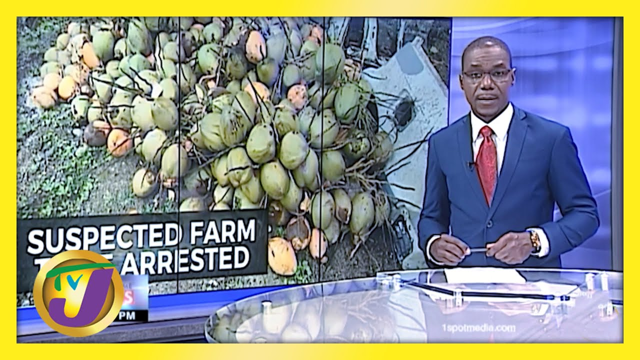 Suspected Farm Thief in St. Mary Jamaica Arrested - February 26 2021 1