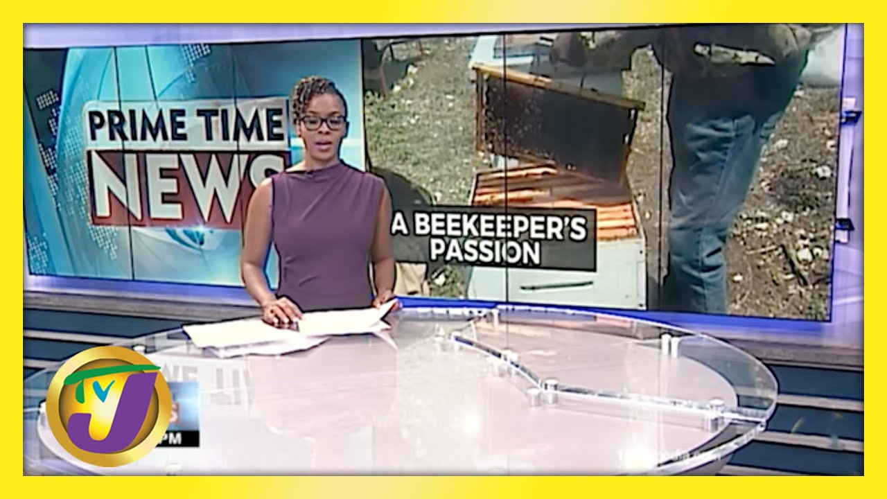 A Sting of Love Beekeeper's Passion in Jamaica | TVJ News - April 19 2021 1