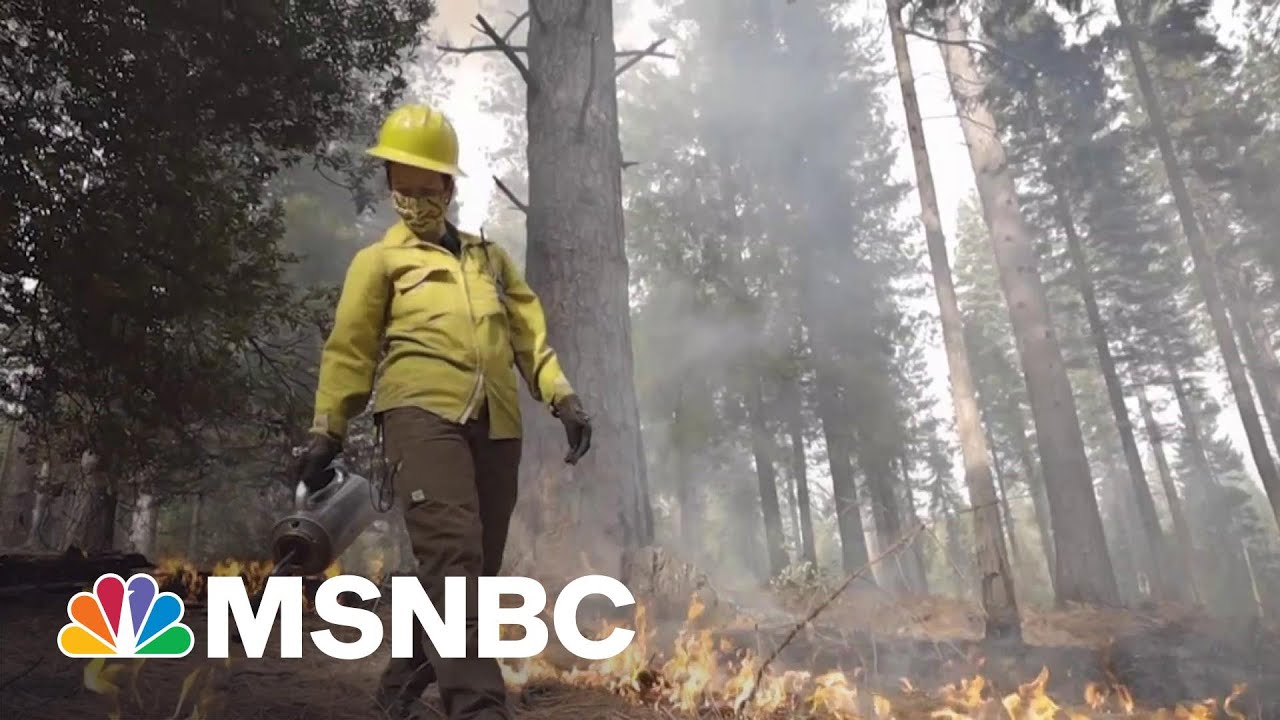 California Scientists Are Fighting Fire With Fire | Craig Melvin | MSNBC 1