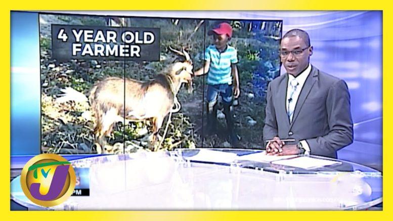 4 Yr Old Farmer in St. Elizabeth Jamaica | TVJ News 1