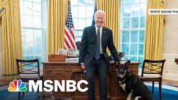First Lady Jill Biden On Major: 'He Is Such A Sweet Lovable Dog' | MSNBC 8