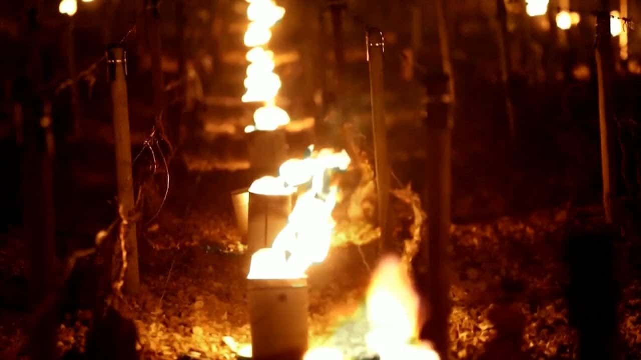 French winemakers use large candles to fight against frost 9