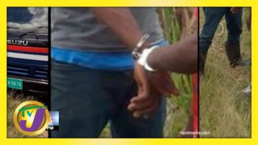Suspected Cow Thieves Arrested in St. Elizabeth, Jamaica | TVJ News - April 6 2021 6