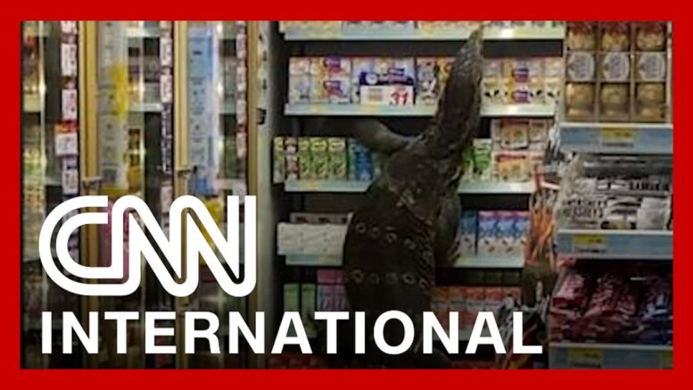 Giant monitor lizard freaks out shoppers in Thailand 1
