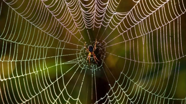 New technology could help scientists learn spider language 1