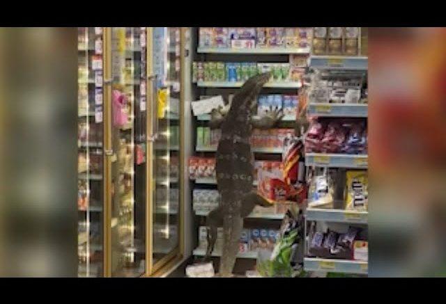 Huge lizard climbs shelf in Thailand supermarket 1