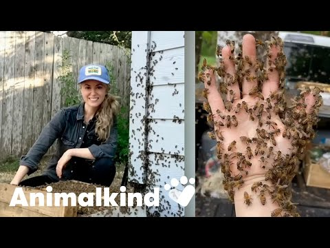 Beekeeper rescues bees with her bare hands | Animalkind 1