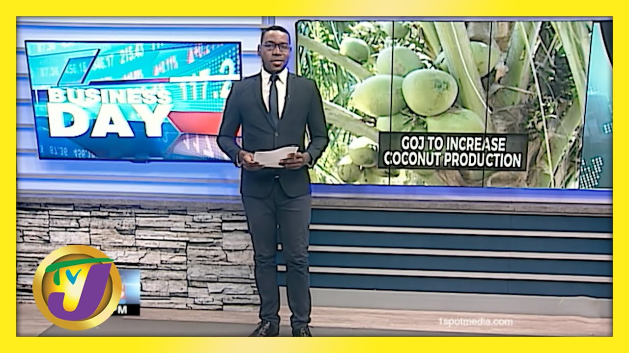 Jamaican Gov't to Increase Coconut Production   TVJ Business Day - May 14 2021 1