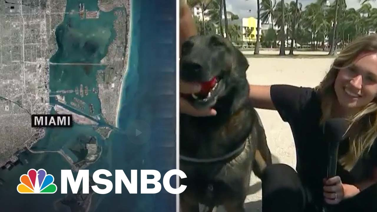That's A Good Boy: Covid-Sniffing Dogs Screen Guests At Miami Festival 1