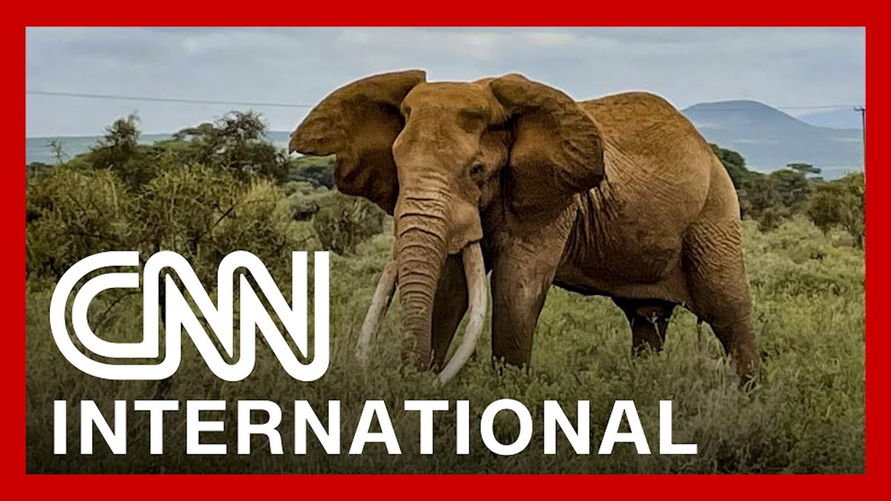 See how African national park is trying to count every animal 1