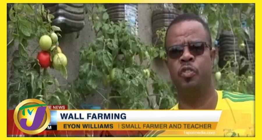 Wall Farming in Jamaica | Small Farming Ideas | TVJ News - May 30 2021 5