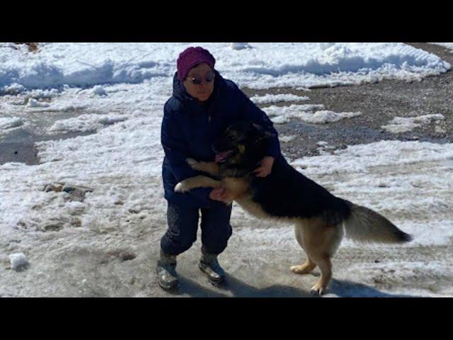 Dog travels 70 km across Nunavut to reunite with family 1