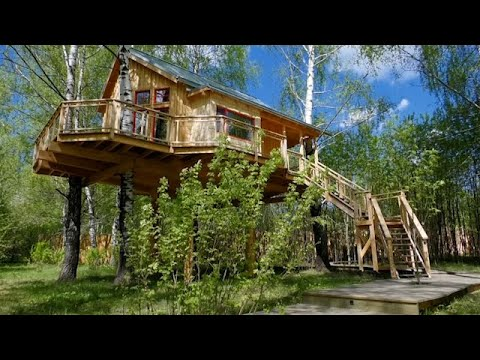 Couple build treehouse hotel in Russian woods 1